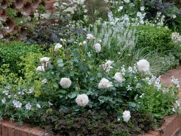 Белая роза в цветнике с почвопокровными
