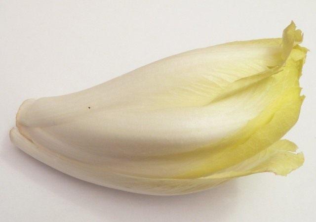 Цикорный салат Витлуф