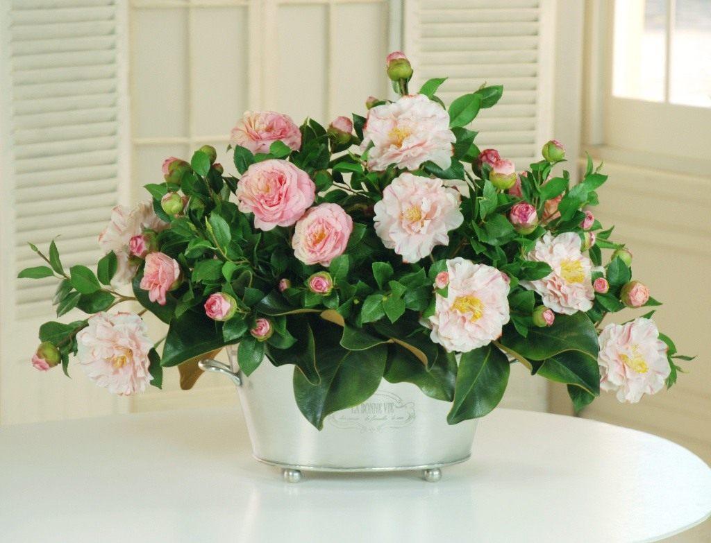 Цветы на подоконнике цветущие зимой