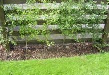 Как замаскировать растениями компостную яму