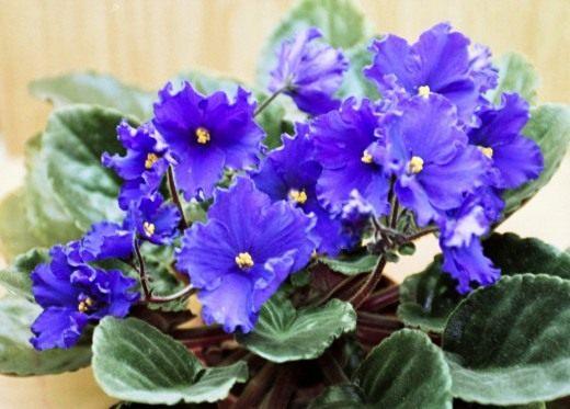 кемира люкс удобрение для комнатных растений