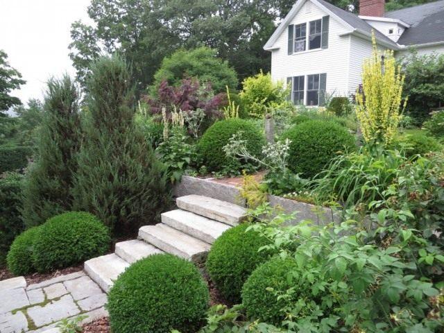 Крупные растения способны подчеркнуть ступени и в тоже время скрыть перепад высот