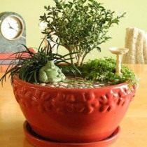 Японский садик в миниатюре