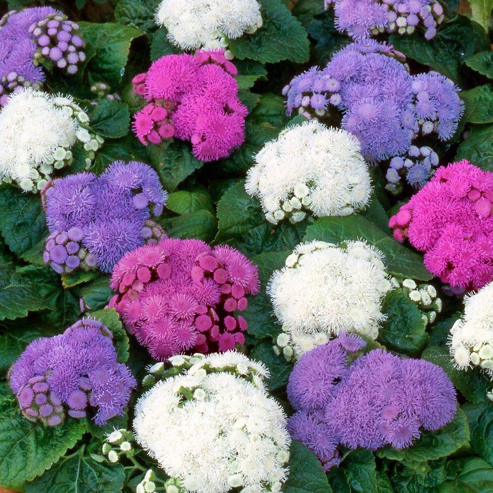 Цветочная лавка  цветы  violetkievua