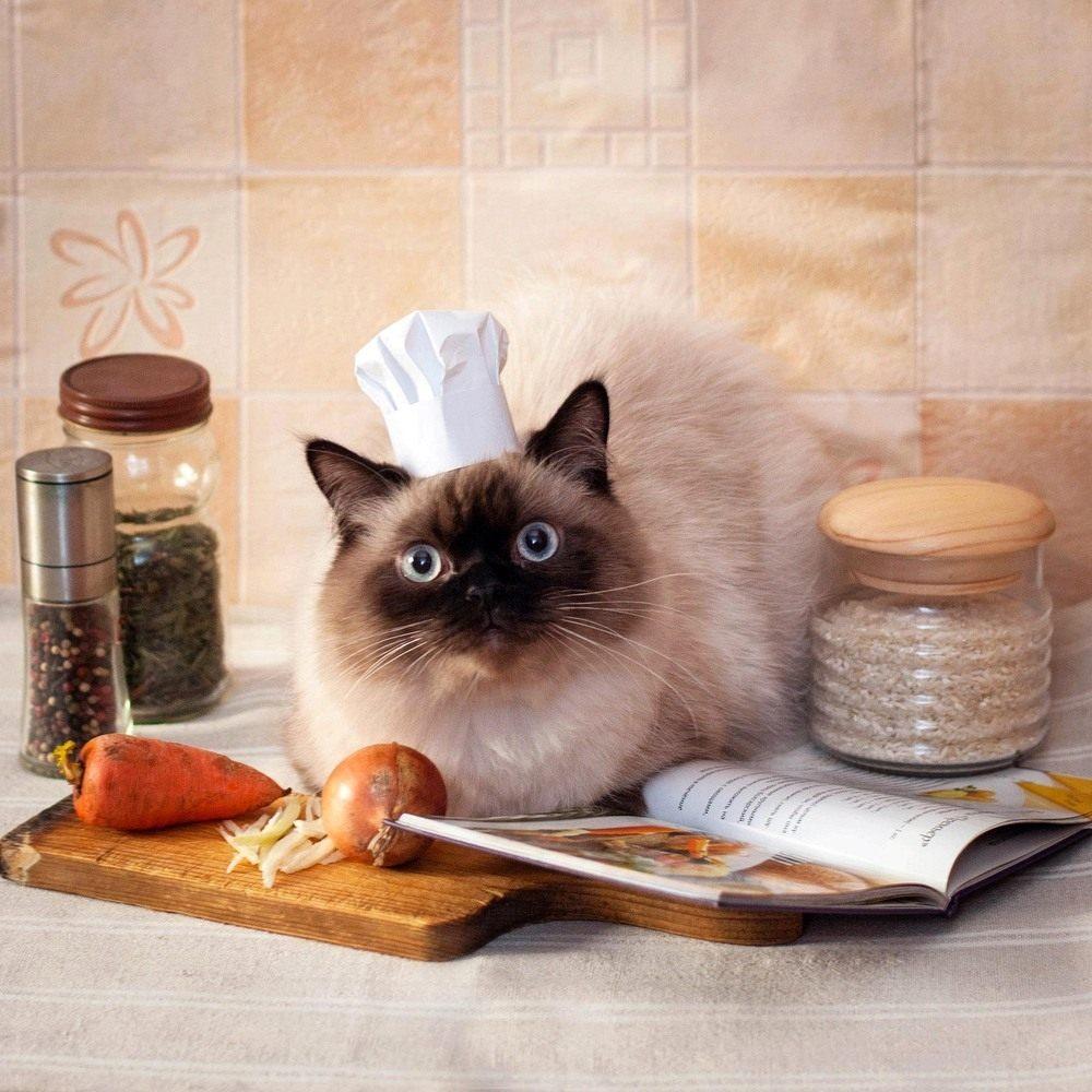 chef-cat