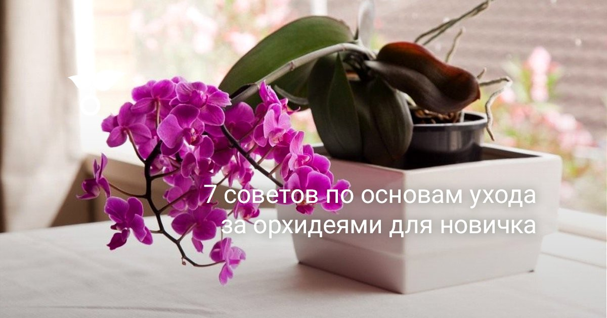 Уход за орхидеей: особенности посадки и ухода – Cельхозпортал