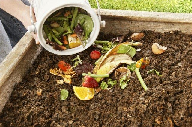 Органика в компосте