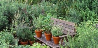 Лекарственный огород