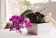 7 советов по основам ухода за орхидеями для новичка