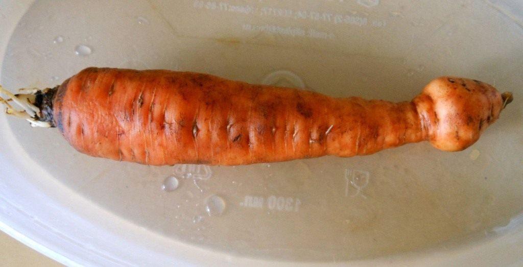 morkov-strannaya