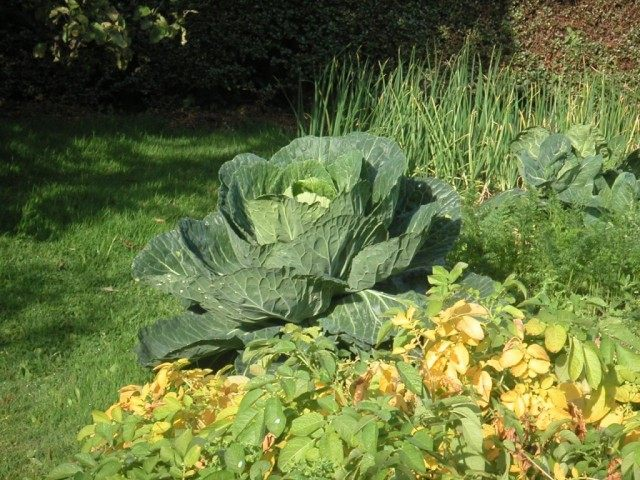 Огород органического земледелия