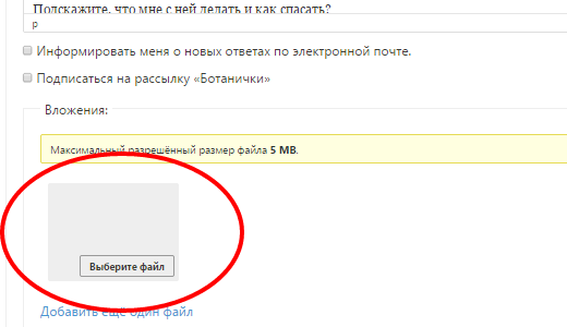 Поле «Вложения» и кнопка «Выберите файл»