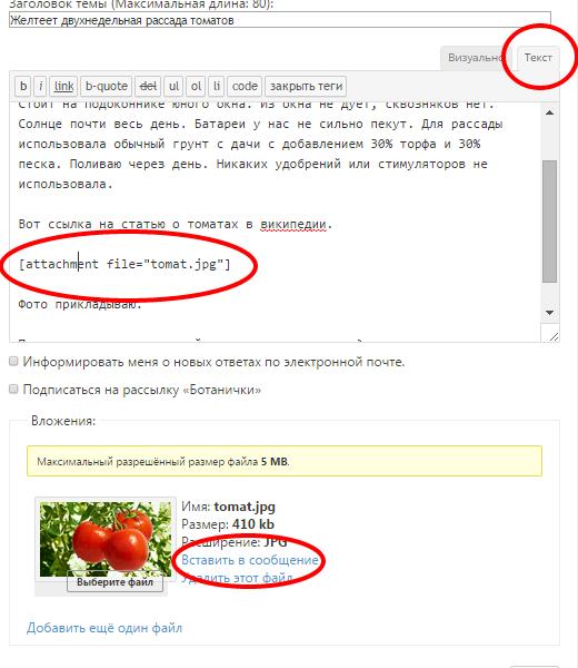 В режиме текстового редактора нажмите ссылку «Вставить в сообщение»