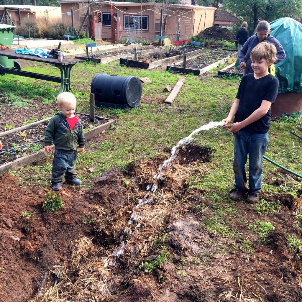 Выращивание малины на даче: где и когда сажать, методы посадки