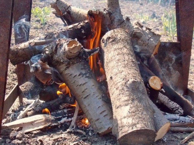 Древесина лиственных пород лучше всего подходит для углей под шашлык