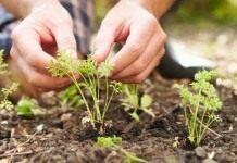 Календарь садово-огородных работ на июнь