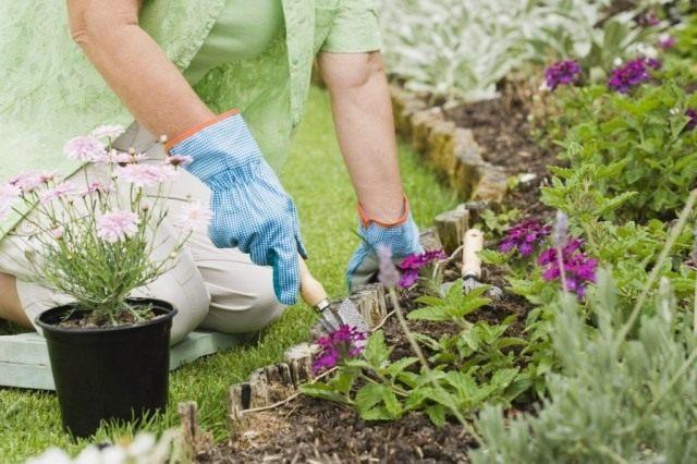 Садовые хлопоты в июне