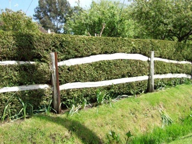 Живая изгородь из Боярышника