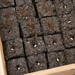 05-soil-block