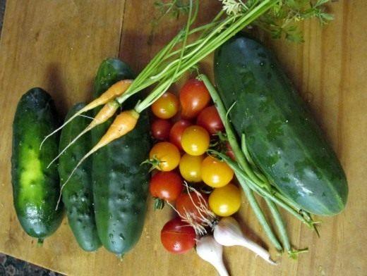 Урожай ранних овощей