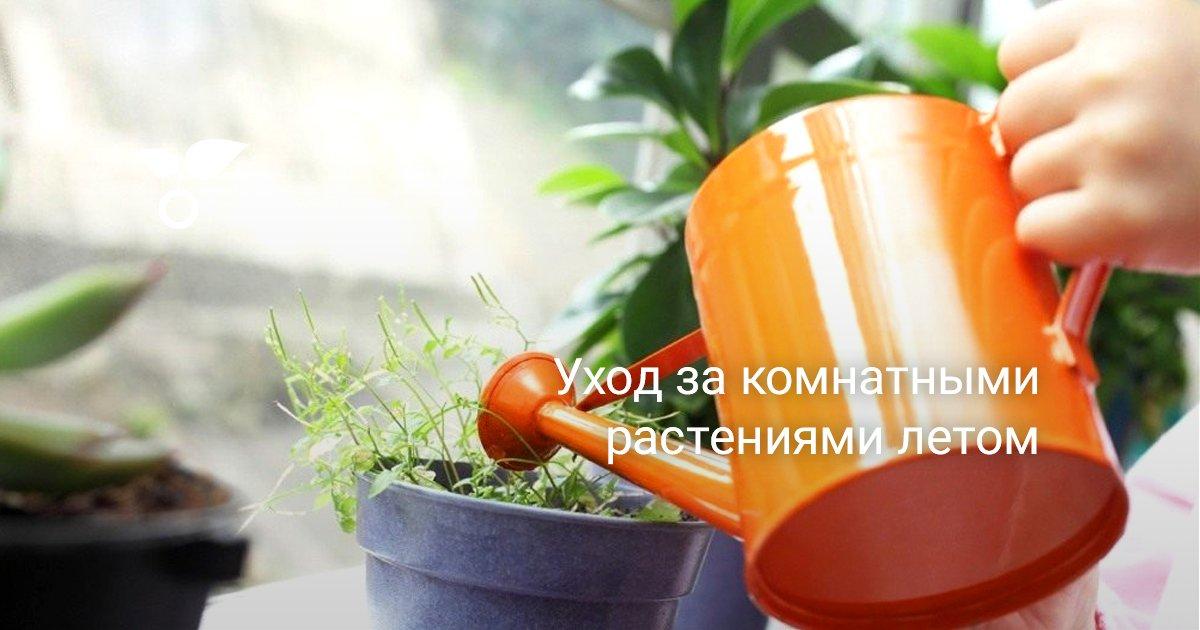 Правильный уход за садовыми и комнатными цветами