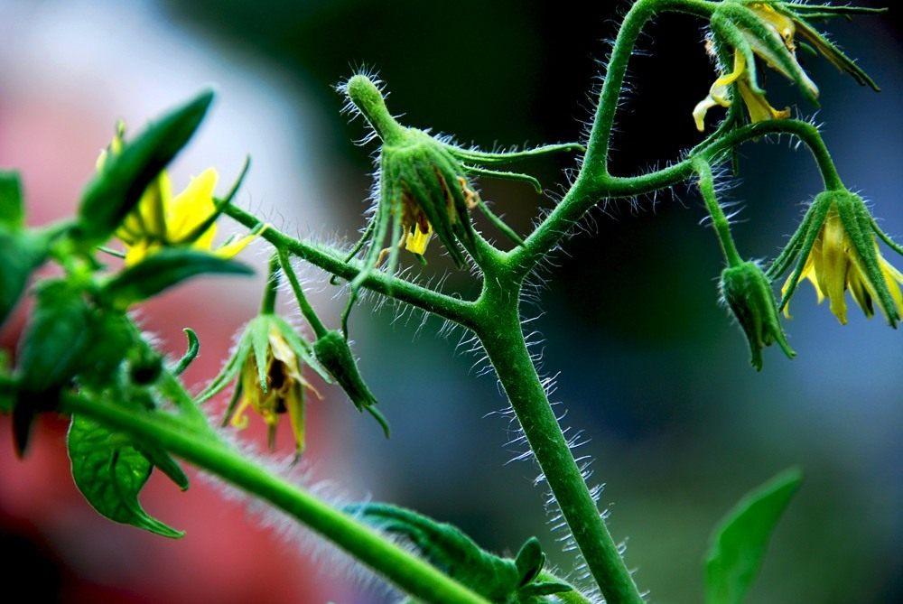 растения снижающие холестерин в крови