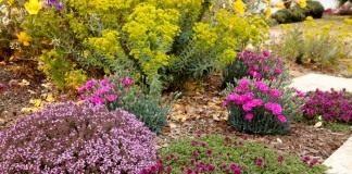Цветник из растений, не требующих частых поливов