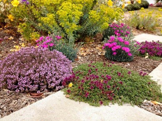 Цветник из растений не требующих частых поливов