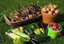 Как правильно собрать и сохранить урожай овощей