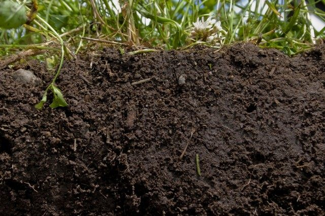 Чернозём, богатая гумусом почва