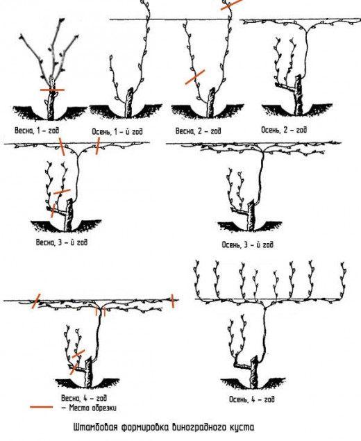 Схема Штамбовового