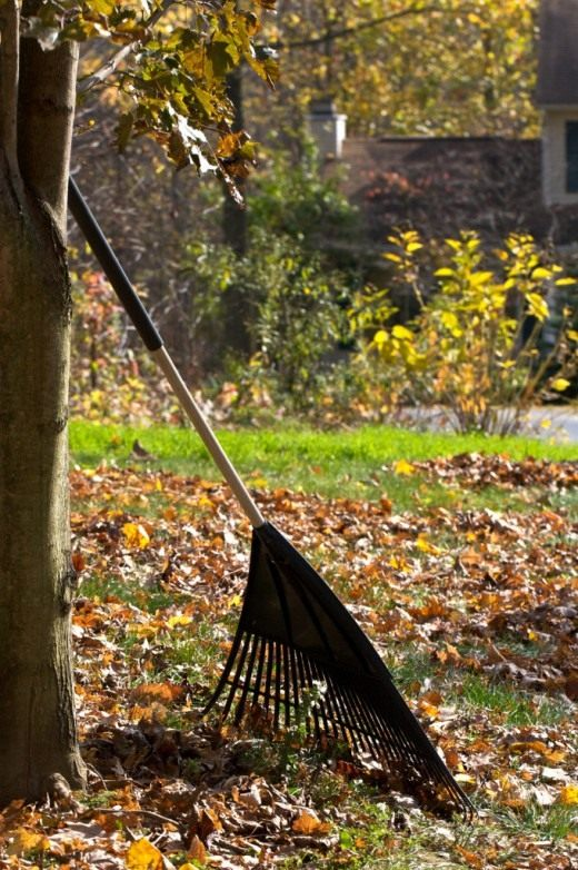 Очищаем газон и цветники от опавших листьев