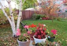 Календарь цветовода на октябрь
