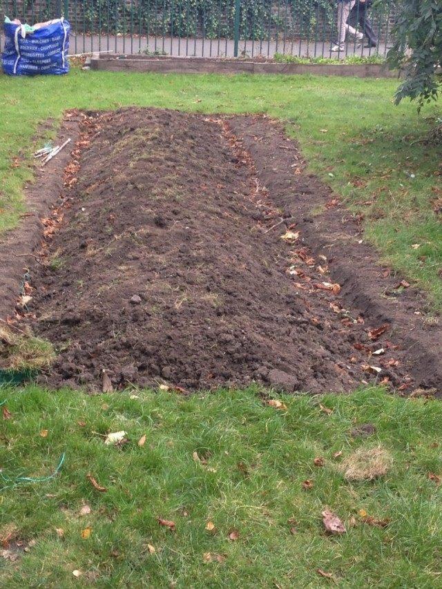 Очищаем участок от мусора. Закладываем его в компост или в теплые грядки