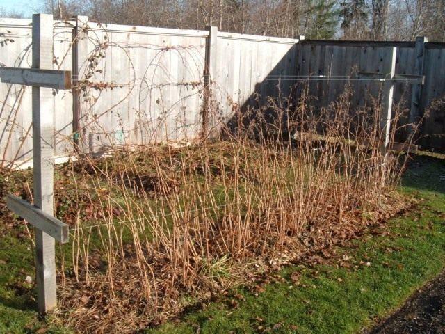 Подготавливаем растения требующие укрытия