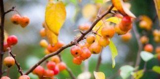 Осень в саду: готовимся к следующему сезону