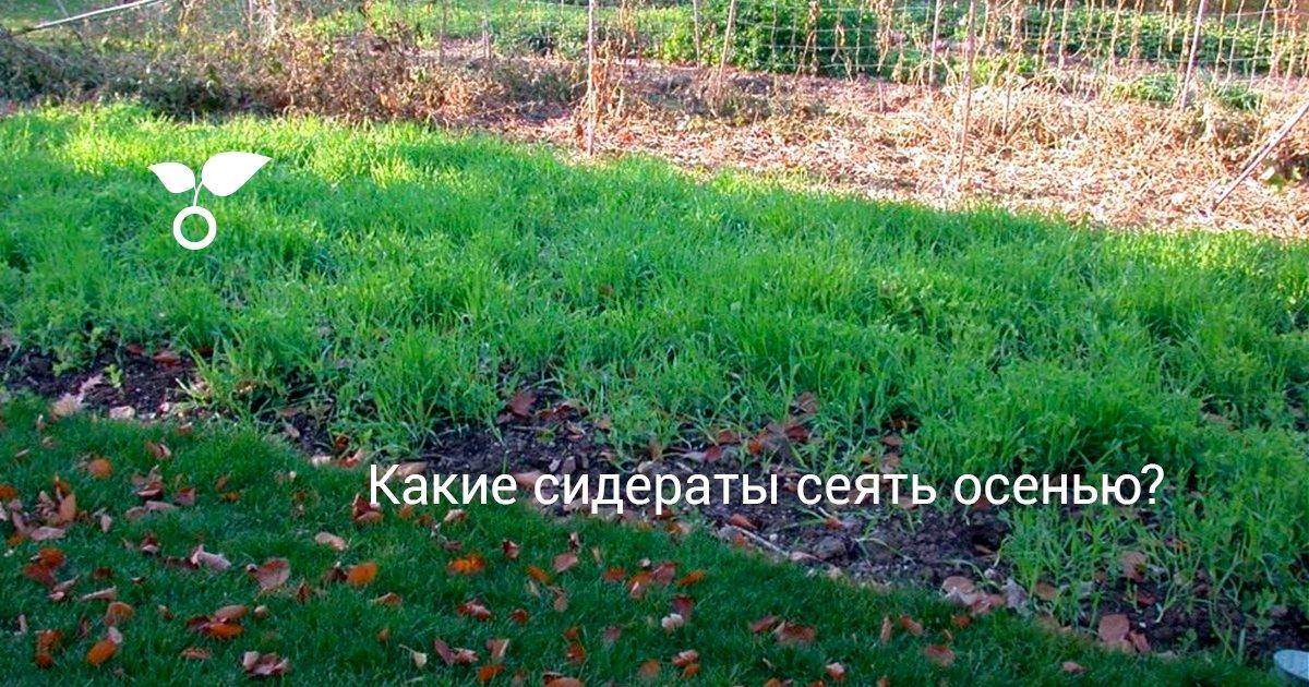 Применение сидератов вместо удобрений