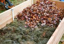 Осень: время позаботиться о хорошем урожае