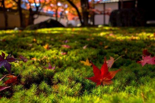 Ноябрь в саду