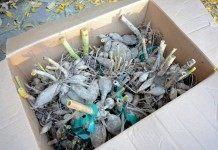 Корнеклубни георгин, подготовленные к зимнему хранению