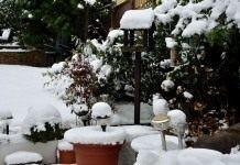 Календарь цветовода на декабрь