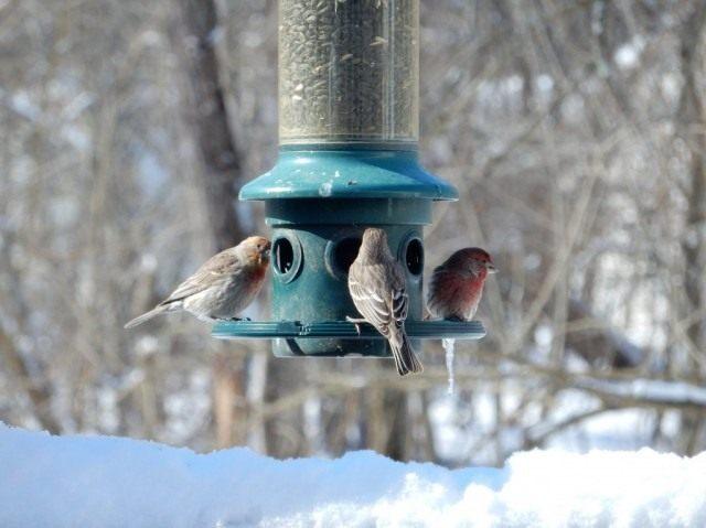 Позаботьтесь о зимующих птицах, соорудив им кормушки