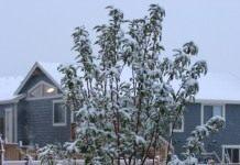 Календарь садово-огородных работ на декабрь