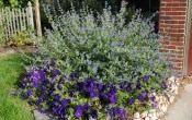 3 лучших кустарника для цветника