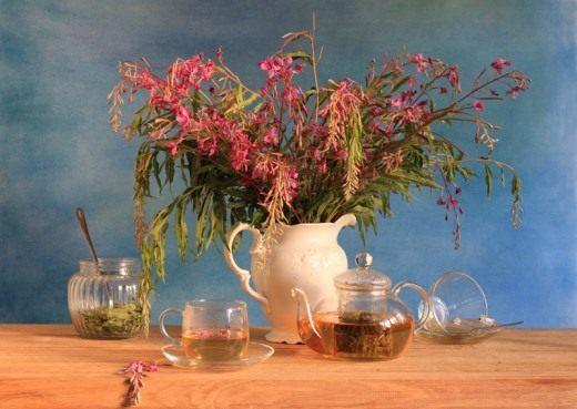 Копорский чай, Иван-чай, кипрей.