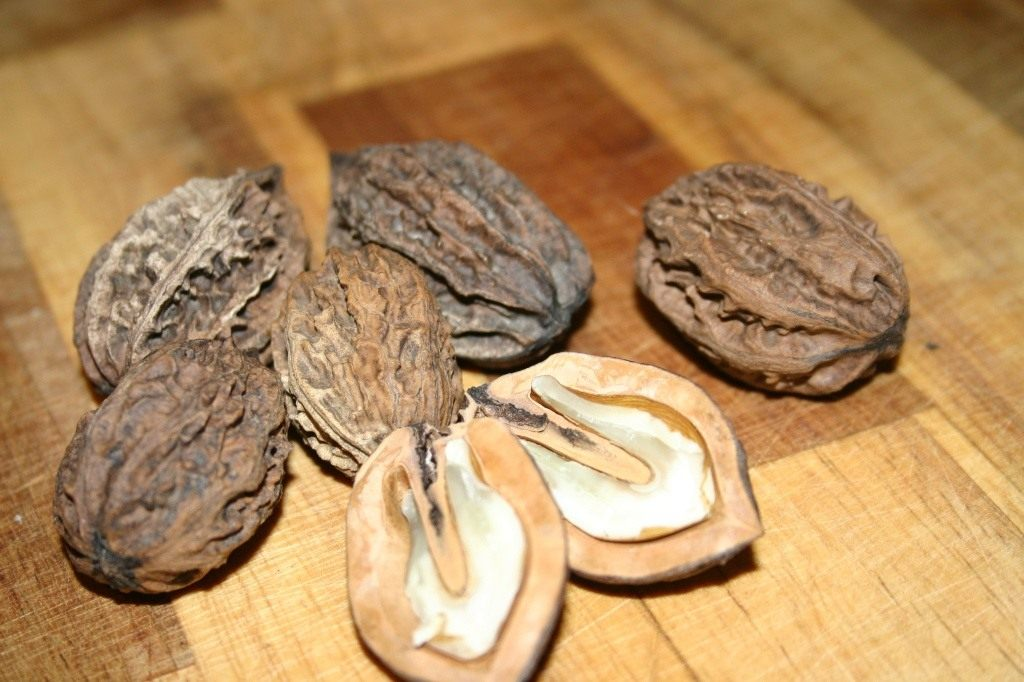 Маньчжурский орех фото и выращивание