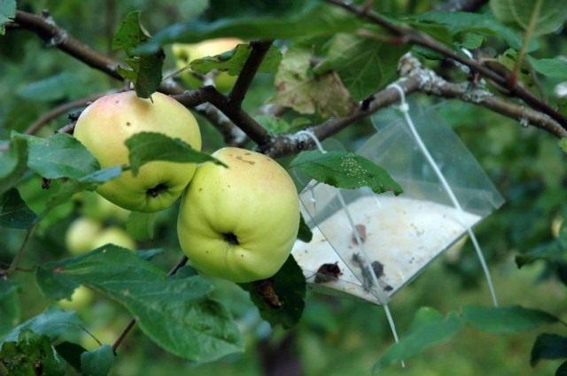Ловушка для насекомых вредителей