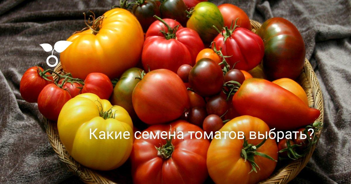 Какой сорт помидоров выбрать из всего многообразия