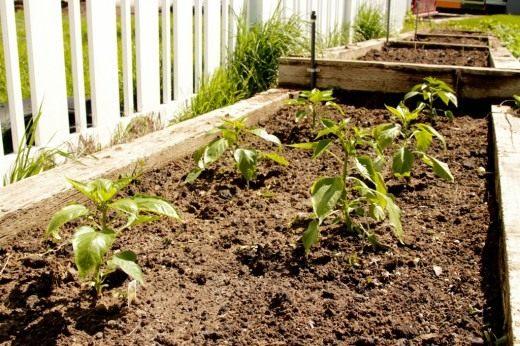 Почва, улучшенная органикой
