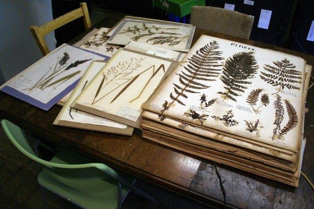 Коллекция гербариев Южного Лондонского Ботанического института.